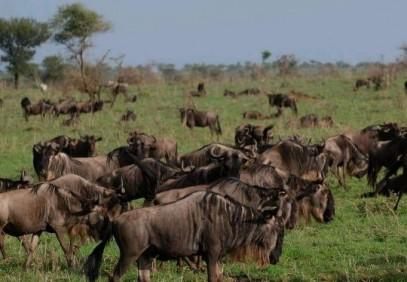 7-Day Journey of the Wildebeest Safari