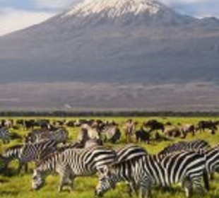 3 Days Amboseli Luxury Safari
