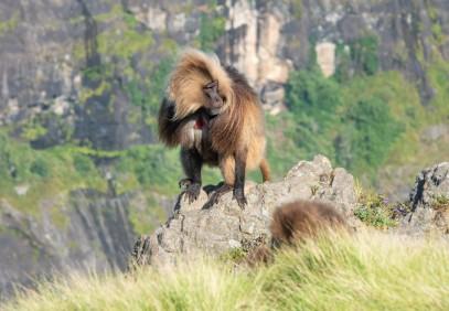 9-Day Ethiopian Wildlife Tour