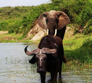 3 Days Queen Elizabeth Uganda Safari