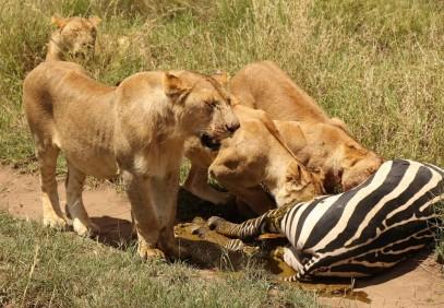 3-Day Serengeti & Ngorongoro Group Safari