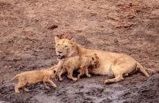 4-Day Tarangire, Serengeti, Ngorongoro Camping Safari