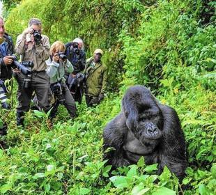 3 Days Incredible Gorilla Safari