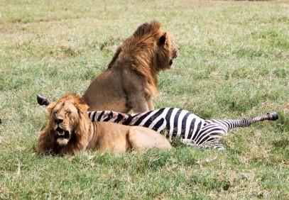5 Days Tanzania Popular Safari