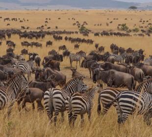 5 Days Serengeti Great Migration Safari