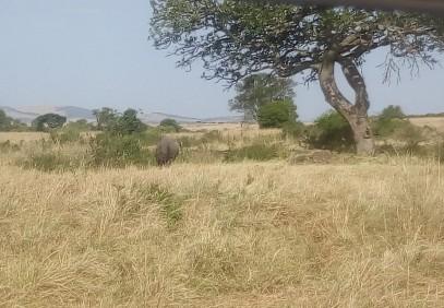 4 Days Masai Mara Lodge Safari