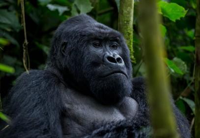 3-Day Uganda Gorilla Safari