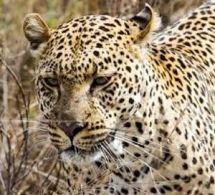 3 Days Serengeti Safari and Ngorongoro Crater