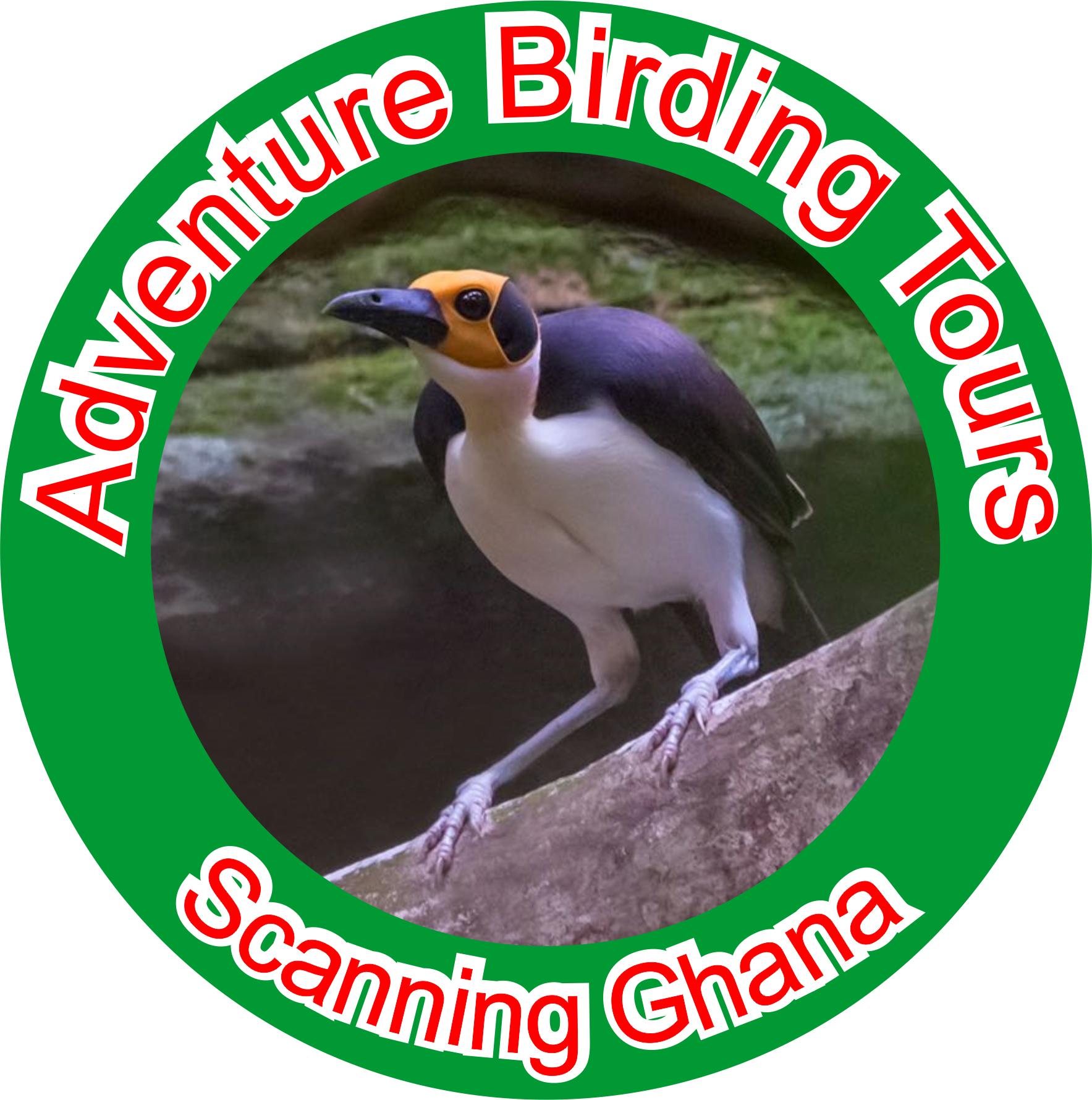 Adventure Birding Tours Ghana