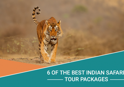 6 of the Best Indian Safari Tour Packages