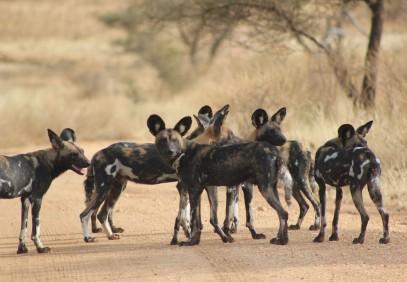3-Day Experience the Wild Safari to Maasai Mara