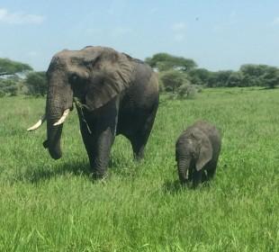2 Days Tarangire and Ngorongoro Crater Safari
