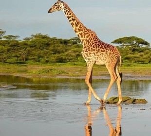 4-Day Essence of Tanzania Safari