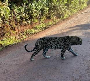 6-Day Path of the Elephant Safari