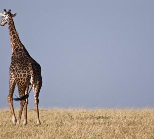 3 Days Tanzania Popular Safari
