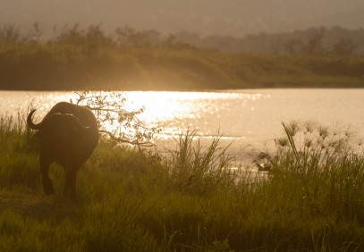 4-DayRwanda Gorilla and Cultural Village Tour