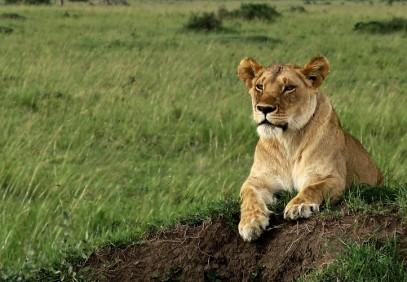 4 Days Tanzania Safari Tarangire Serengeti Ngorongoro