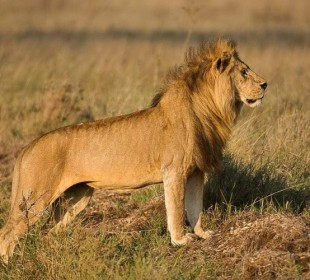 Special Offer – 4-Day Ultimate Tanzania Safari Tour