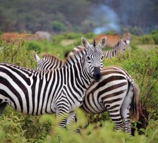 5-Day Classic African Safari Tour